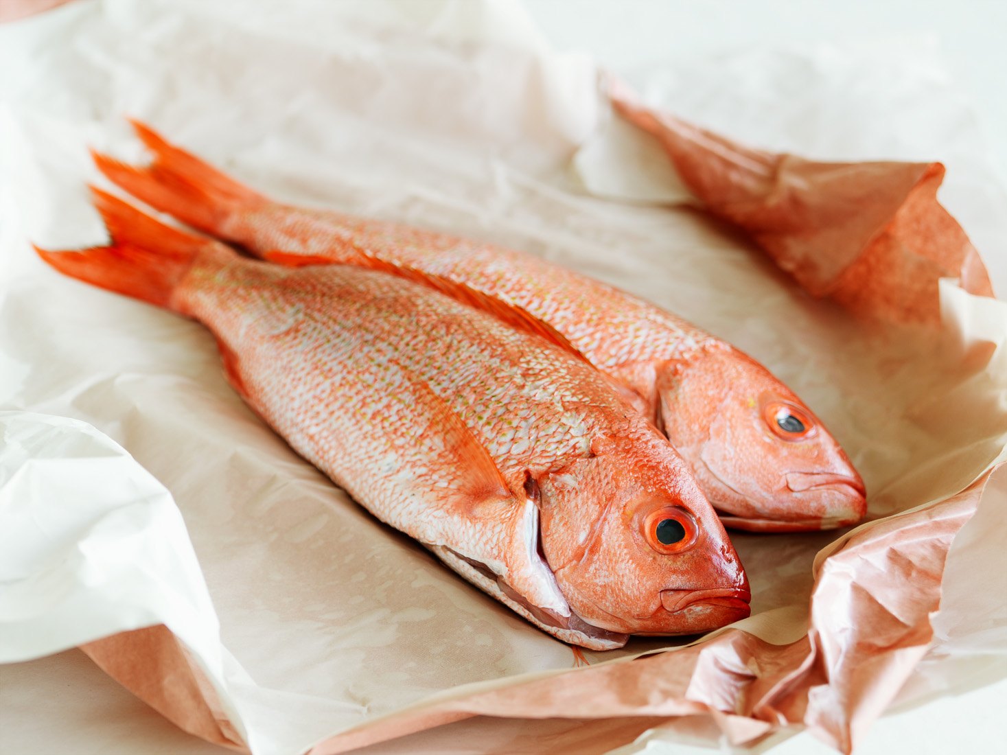 whole fresh snapper fish